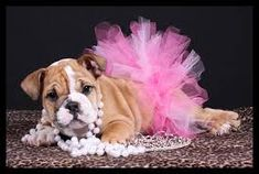 Image result for puppy photoshoot