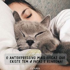 PURA VERDADE! <3 <3 <3 #petmeupet #gato #amogato