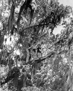 """Florida Memory - Tarzan and Jane during filming of """"Tarzan's Secret Treasure"""" - Wakulla Springs, Florida"""