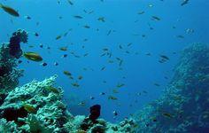 Sari Express Travel » Tiran Island and snorkeling
