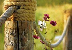 Nautical Fence and Cosmos to blow in the breeze. Country Charm, Country Life, Country Girls, Country Living, Country Bumpkin, Rustic Charm, Country Style, Rope Fence, Country Fences