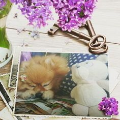 ✨お気に入りのぬいぐるみ(ピーちゃん)と夢の中へ✨ #愛犬  #ポメラニアン  #ポメラニアンが世界一可愛い  #ぬいぐるみ #可愛い #寝顔  #オルガ  #オルちゃん  #pom  #pomeranian  #photolab  #photo
