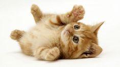 kitten - Buscar con Google