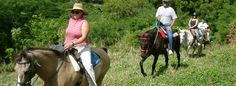 Paul & Jill's Equestrian Stable takes you on an hour and a half long, 4-5 mile horseback ride through the lush, tropical rainforest of St. Croix's West End.