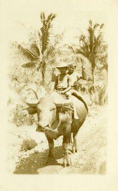 """Foto de época """"El búfalo de agua vino a domicilio"""" Foto Foto Old Black &…"""