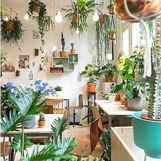 Just one or two plants to keep things #green #arrohome #plantlife