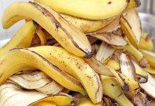 Skóra banana w ogrodzie, naturalny nawóz