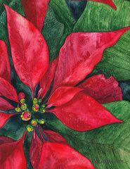 Poinsettia Painting - Navidad by Casey Rasmussen White Christmas Poinsettia, Christmas Flowers, Noel Christmas, Christmas Crafts, Xmas, Watercolor Christmas Cards, Watercolor Cards, Watercolor Flowers, Painting Flowers