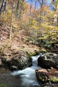 Take a beautiful scenic drive on the Roaring Fork Motor Nature Trail.