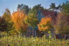 Herbst in Sagasfeld