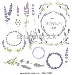 Hand drawn set of lavender flowers, wreaths and decoration elements. vector…
