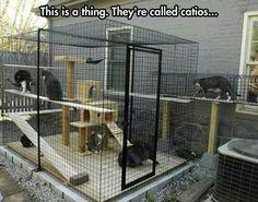 I think I'll be needing a catio