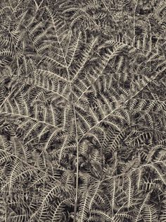 Buy Texturize #2 (fern), Black & white photograph (C-Type) by Marco Scataglini on Artfinder. Discover thousands of other original paintings, prints, sculptures and photography from independent artists.