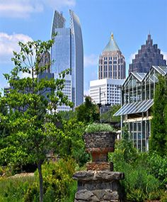 The Atlanta Botanical Garden's oldest bonsai tree, with a beautiful view of the city!