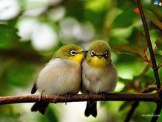 Cute birds on a branch Animal HD desktop wallpaper, Bird wallpaper - Animals no. Cute Birds, Pretty Birds, Small Birds, Colorful Birds, Little Birds, Beautiful Birds, Animals Beautiful, Beautiful Couple, Animals And Pets