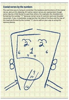 Pinterest Pin of the Week: Cranial Nerves by the Numbers-  Pinned by @PediaStaff – Please Visit http://ht.ly/63sNt for all our pediatric therapy pins
