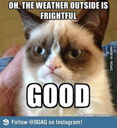 Grumpy Cat Strikes Again! - Likes