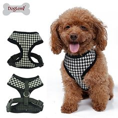 Cute Dog Harness, Dog Tutu, Puppy Supplies, Dog Store, Dog Jacket, Pet Clothes, Dog Accessories, Colorful Fashion, Small Dogs