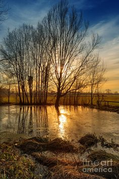 ✯ Sunset on Pond