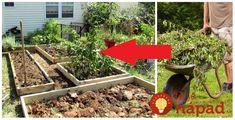 Napísal nám záhradkár Peter z Oravy, ktorý sa chce podeliť o múdru radu, ktorú mu dal kedysi jeho dedko, najmúdrejší gazda, akého poznal. Radí to urobiť každému, nebudete sa stačiť diviť, aký vplyv to bude mať na vašu záhradu o rok! Túto zeleninu nikdy nevyberajte zo zeme – ani keď je po úrode, ani keď... Gardening, Ideas, Lawn And Garden, Thoughts, Horticulture