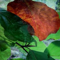 So langsam wechseln die Farben der Blätter von Grün zu Rot und Braun... Der Wald wandelt sein Kleid Plant Leaves, Plants, Fall Color Schemes, Woodland Forest, Get Tan, Red, Plant, Planets
