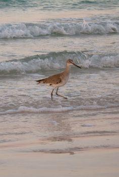 Walking on the beach on Anna Maria Island