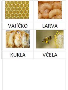Blanche - Křížem krážem: Včela - vývoj, karty Printable Pictures, Book Projects, Animal Crafts, Montessori, Preschool, Kids, Bee Art, Bees, Naturaleza