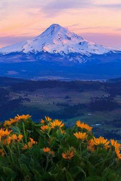 1000 images about oregon complete on pinterest central oregon oregon and oregon coast for Hood river swimming pool hours