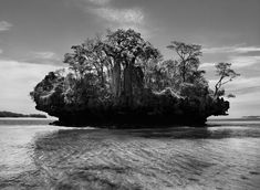 Ile avec baobab incroyable © Sebastiao Salgado