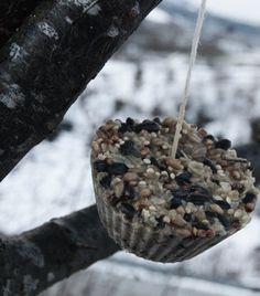Småfuglene må også få mat om vinteren. Her har du 10 fuglematere du kan lage med barna.