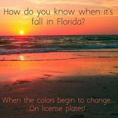 Fall Season In Florida Florida Weather, State Of Florida, South Florida, Florida Girl, Florida Quotes, Florida Funny, Florida Humor, Did You Know, Told You So