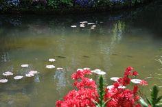 fish-giverny.jpg (1200×797)
