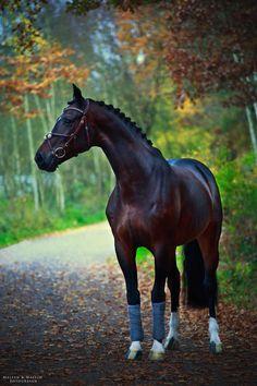 Horses & Books   classicaldreaming: scarlettjane22: Pferde...