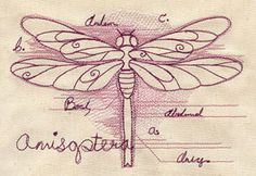Dragonfly Diagram design (UT2589) from UrbanThreads.com