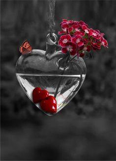 Splash of Colour Heart Images, Love Images, Beautiful Pictures, Color Splash, Color Pop, Heart Wallpaper, Love Wallpaper, Splash Photography, I Love Heart