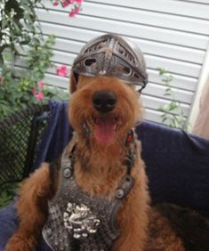 Airedale Terrier, Terriers, Cute Puppies, Cute Animals, Friends, Dogs, Art, Pretty Animals, Amigos