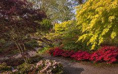 Okrasné stromy a dreviny sú neoddeliteľnou súčasťou našich záhrad. Vybrali sme tie najkrajšie: Plants