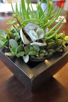 Love a succulent garden for the home! #LowMaintence #Plant @ProFlowers