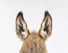 Donkey//