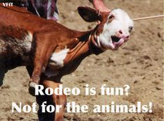 Rodeos  are for cowards   http://www.change.org/petitions/u-s-government-ban-all-rodeos-in-the-u-s  #BanRodeo