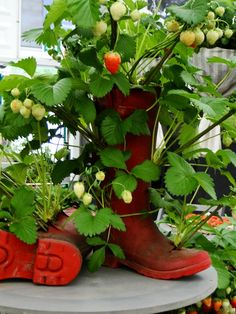 Strawberry boots :) (and other container ideas) Love Garden, Summer Garden, Garden Pots, Strawberry Garden, Strawberry Fields, Diy Planters, Planter Ideas, Plantation, Diy Garden Decor