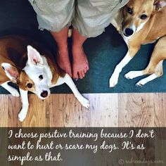 I Chose Positive Reinforcement Training Because I Don't Want to Hurt or Scare My Dogs.