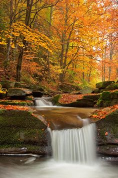 ~~River Rapid ~ autumn forest by Evgeni Dinev~~