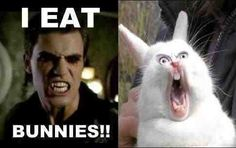 Stefan eats bunnies, funny and sad all at the same time... poor Zorro <3