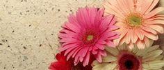wallpaper con flor - Buscar con Google