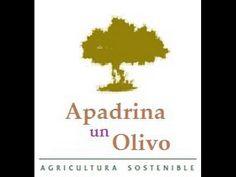 Apadrina Un Olivo,  Vive la experiencia de ser productor durante el tiem...