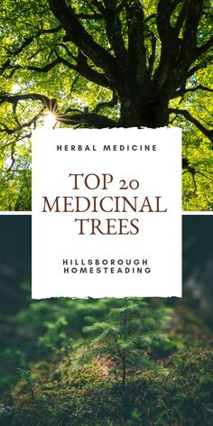 Herbal Medicines - How they work - Acupuncture Hut Natural Home Remedies, Natural Healing, Herbal Remedies, Health Remedies, Natural Oil, Natural Beauty, Holistic Healing, Holistic Wellness, Natural Medicine