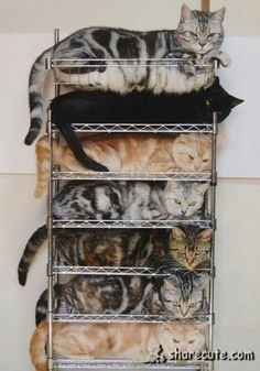 Organized pile of cats