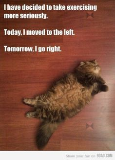 Exercise for cats. Ha! And I don't even like cats