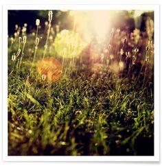 Grass 2 - Premium Poster